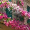 Ампельные растения в балконном ящике