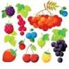 Саженцы ягодных культур