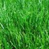 Семена газонов