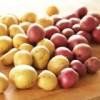 Картофель семенной (ВЕСНА-ЛЕТО)