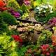 Саженцы прочих цветущих и травянистых кустарников
