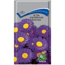 Астра альпийская фиолетовая