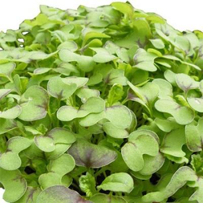 Семена микрозелени Горчица (10 г)