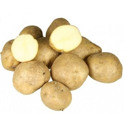 Картофель семенной Голубизна (ЭЛИТА)  (сетка 2 кг)