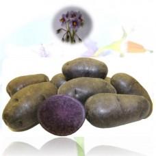 Картофель семенной Фиолетовый (ЭЛИТА) (сетка 2 кг)