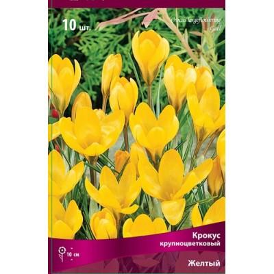 Крокус Желтый (крупноцветковый)