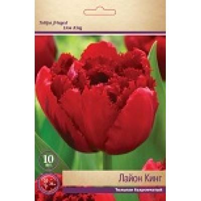 Тюльпан Лайон Кинг (бахромчатый)
