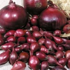 Лук-севок Ред Барон (0.5 кг)
