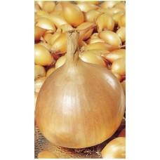 Лук-севок Золотистый Семко (0.5 кг)
