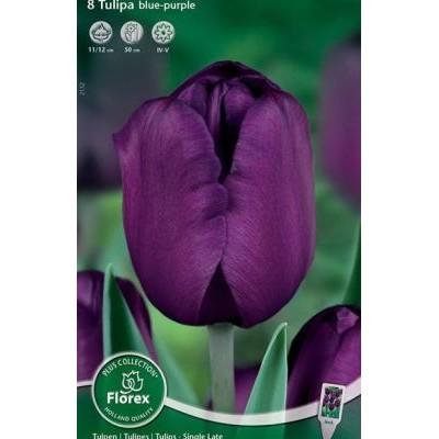 Тюльпан Блу-Пепл (Простые Поздние)